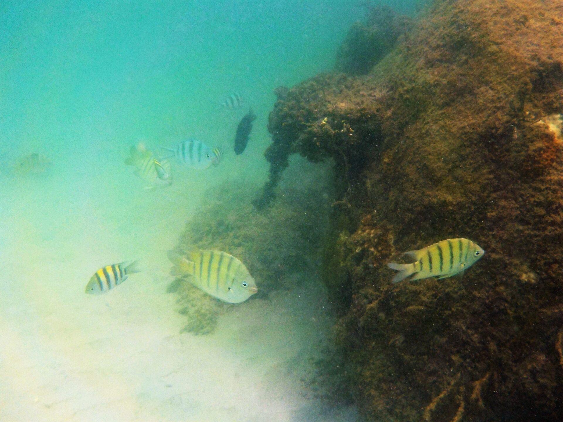 サムイ島でもシュノーケリングは出来た!魚が沢山見れるビーチはここ!【写真あり】