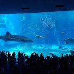 美ら海水族館は沖縄旅行で行く価値あり?他の水族館と何が違うのかを教えます。